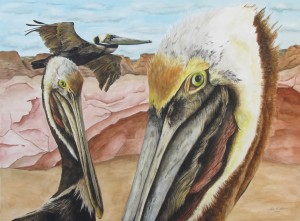 A gathering of brown pelicans in a sandstone canyon, images in three sizes: flying, mid range and close up.