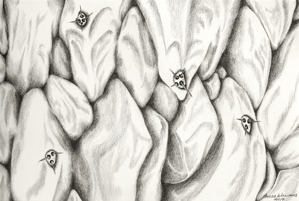 "Close up of a ""grostesque"" succulent rendered in pencil."