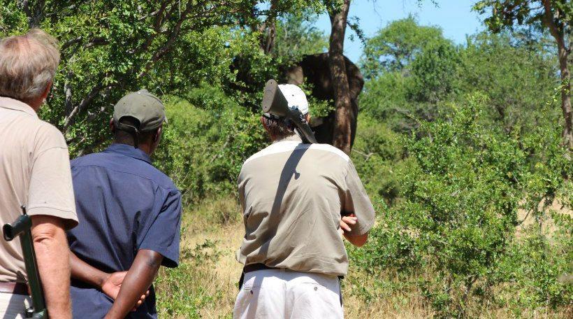 Saving Our Elephants