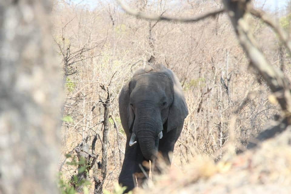 Anti-poaching efforts save elephant