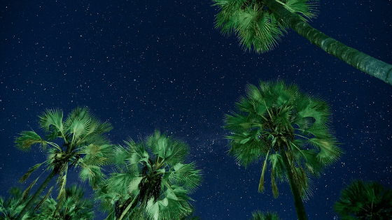 Starry, Starry Night