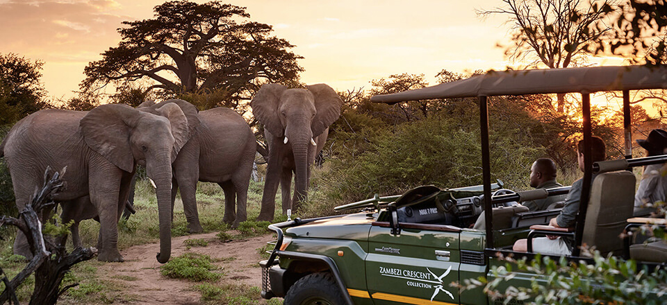 game viewing in Zimbabwe National Parks