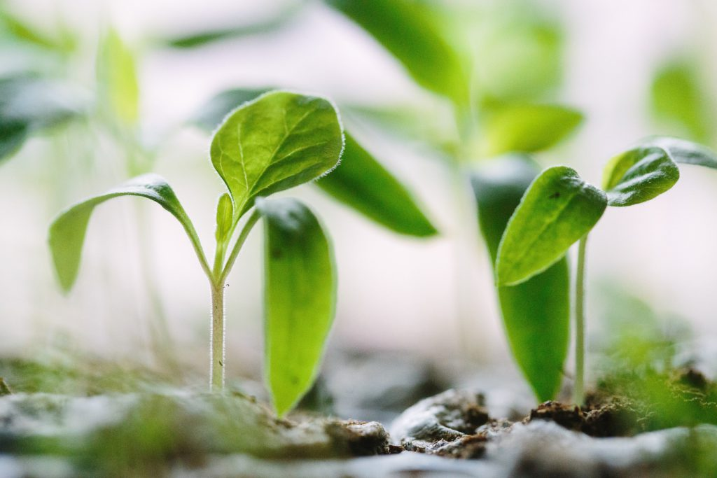 Plant materials degrade to help more plants grow