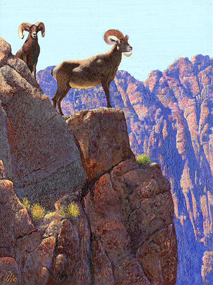 Nevada Horned Sheep