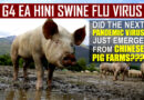 G4 EA H1N1 NOVEL SWINE FLU VIRUS EMERGES FROM CHINESE PIG FARMS--NEXT GLOBAL PANDEMIC?