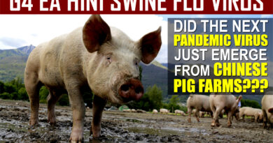 G4 EA H1N1 NOVEL SWINE FLU VIRUS EMERGES FROM CHINESE PIG FARMS--NEXT GLOBAL PANDEMIC?