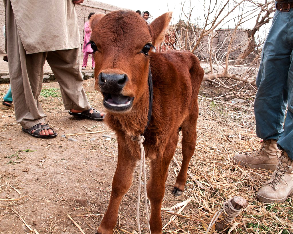 September 2018--Birth of a Red Heifer Candidate