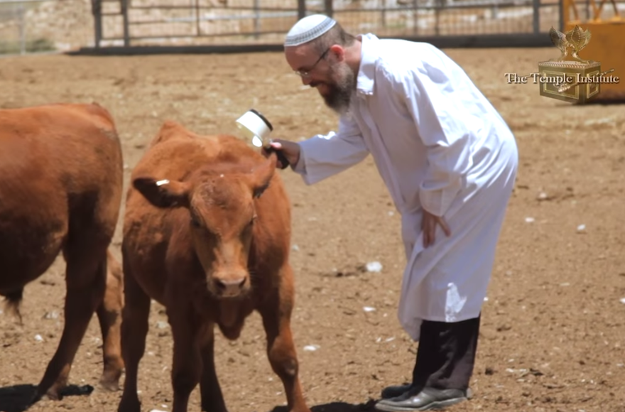 March 2020--Experts from The Temple Institute Inspect a Red Heifer Candidate