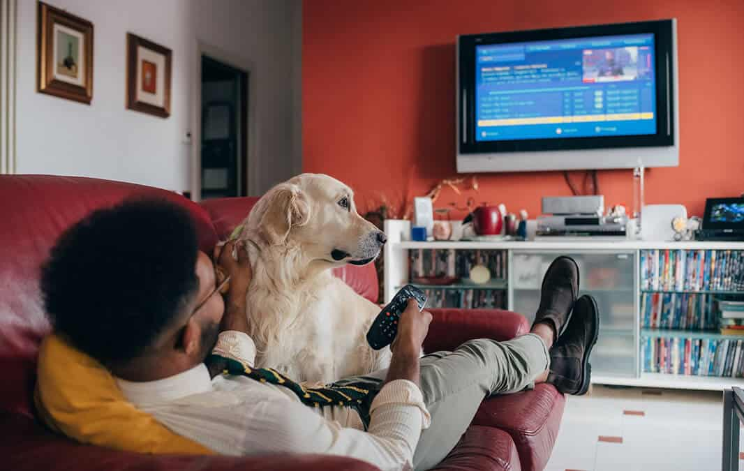 golden retriever on top of a man watching tv