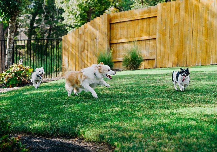 Fenced-Dog-Park-Section