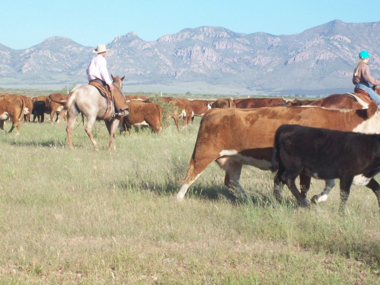 The Mexico Border is a National Crisis for American Cattle Ranchers.