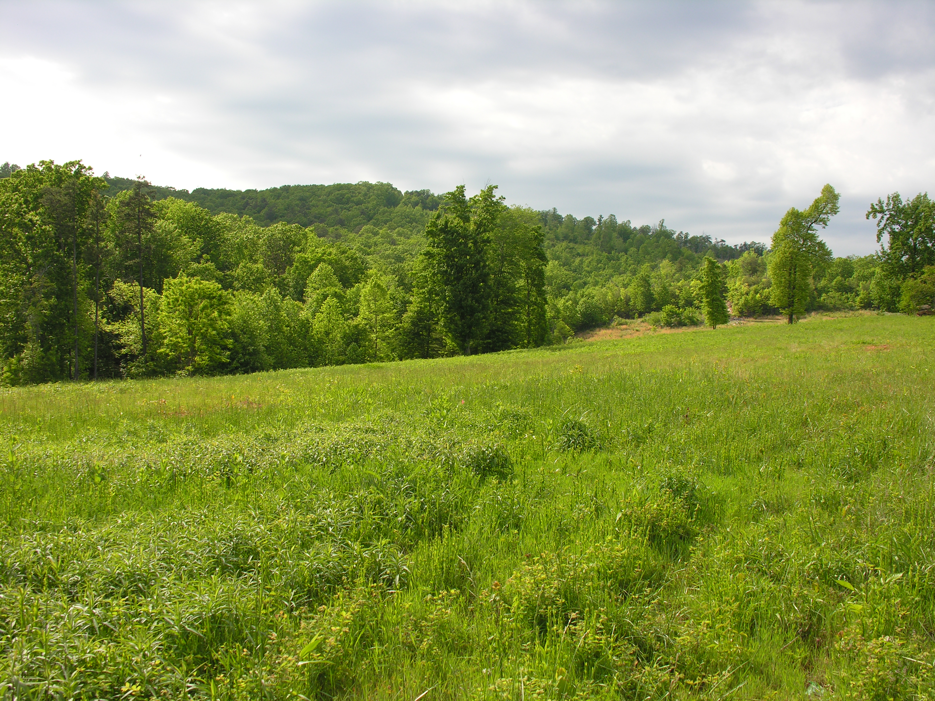 Land in Franklin County, Sontag Ridge, Lot #4