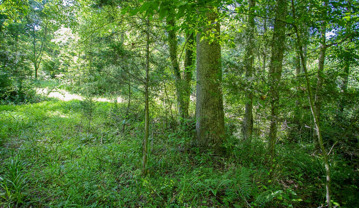 Land for Sale in Madison_09