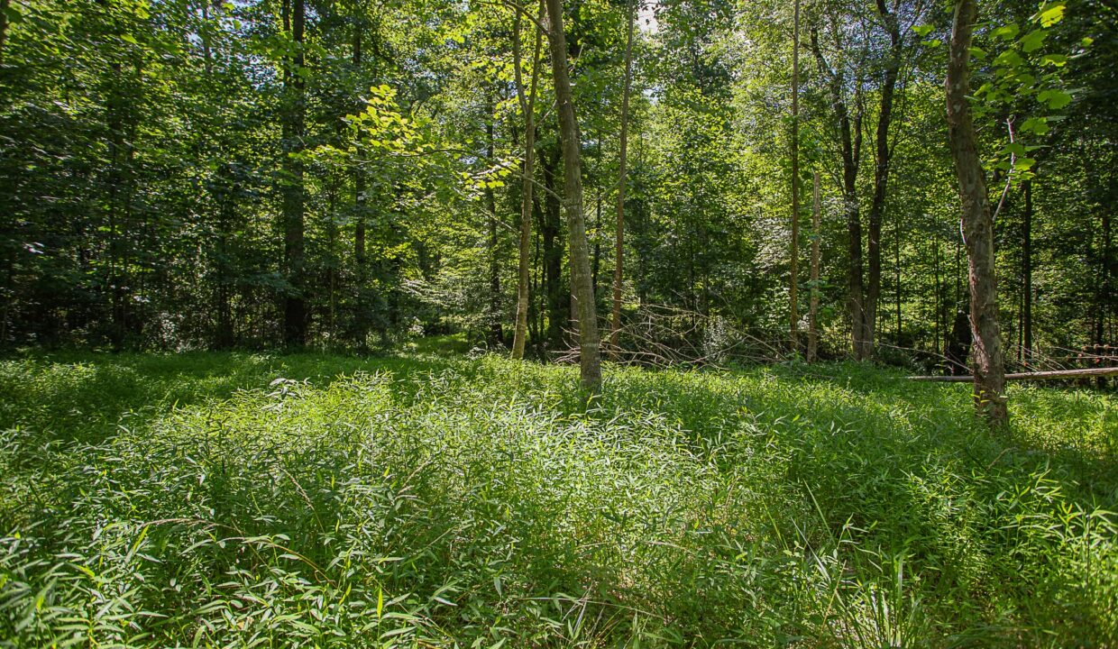Land for Sale in Madison_13
