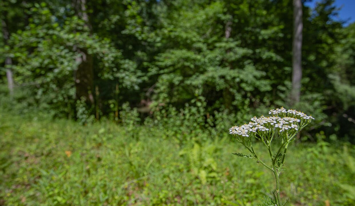 Land for Sale in Madison_26