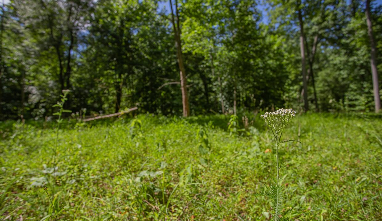 Land for Sale in Madison_27