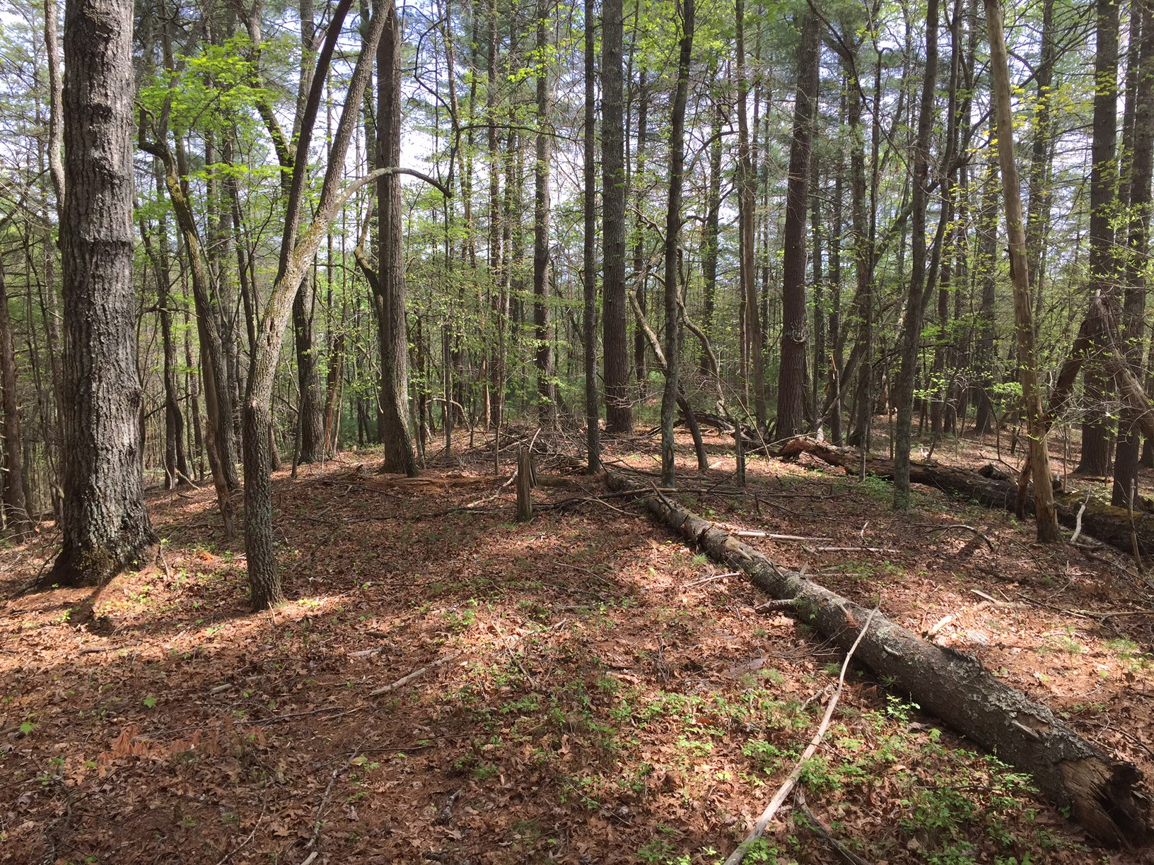 blue ridge forest lot 17