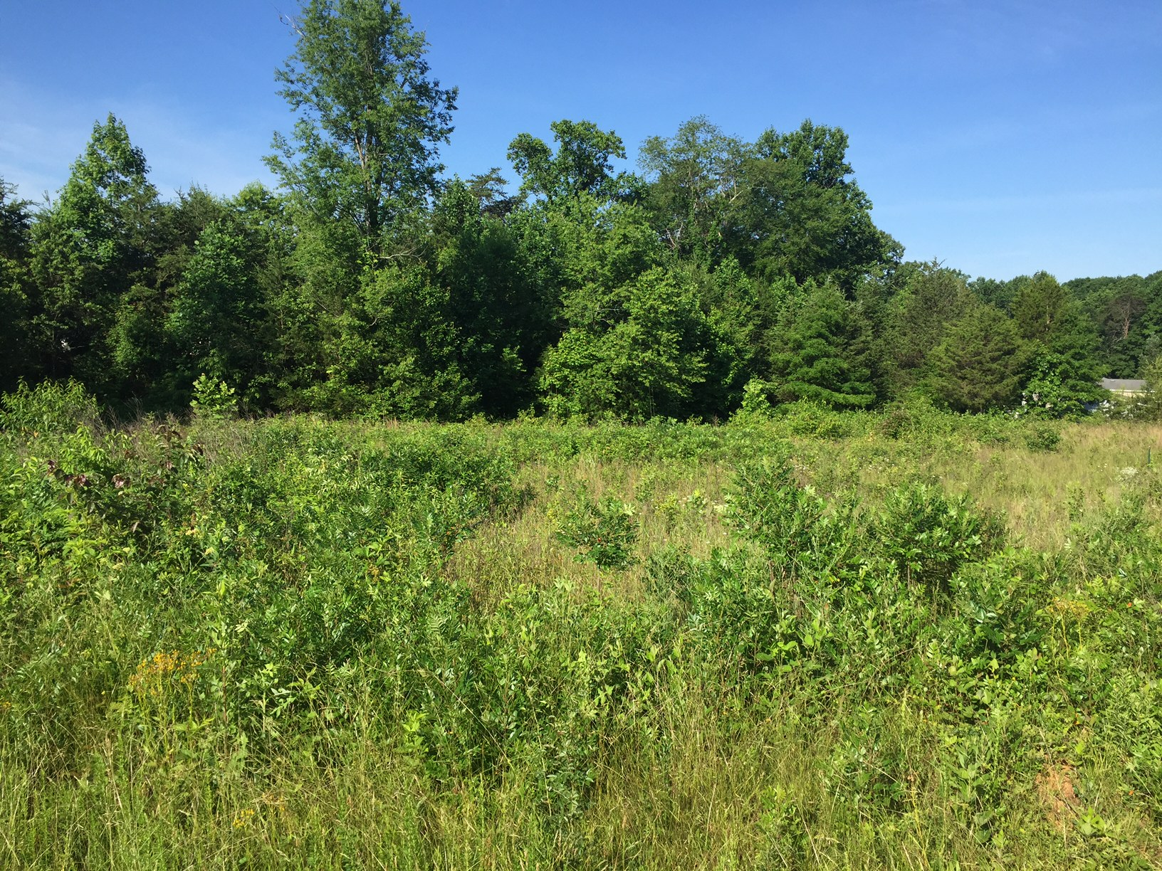 Building Lots in Danville, Sharon Meadows, Lot 56A