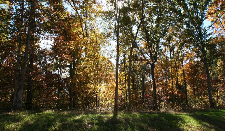 Fall Photos 026