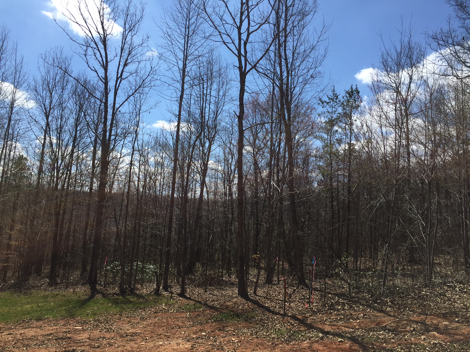 Land for Sale in Nelson County, Laurel Road, Lot 7