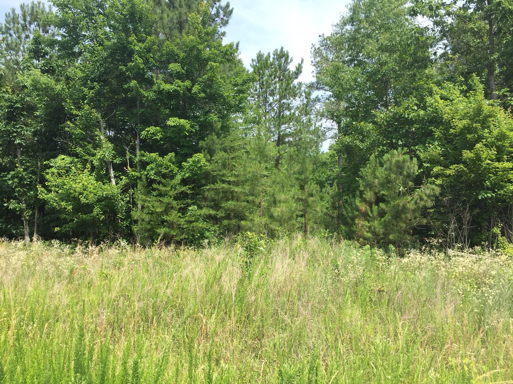 3 Acres of Wooded Land in Buckingham