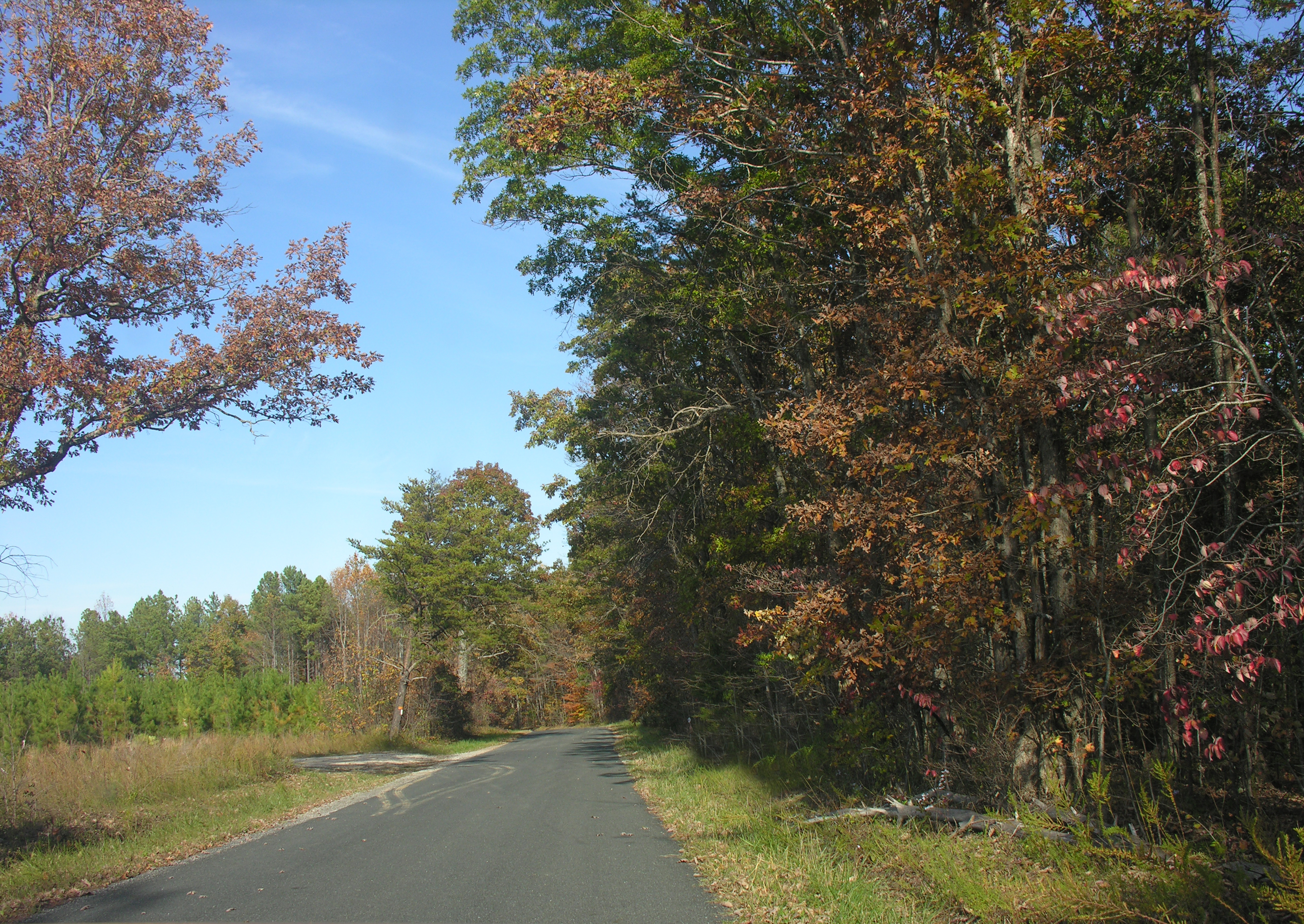 Nelson County Land for Sale, Buck Mountain