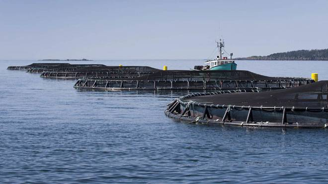 Cooke Aquaculture's salmon farm off Meteghan, Nova Scotia. (Photo by Adrien Veczan)