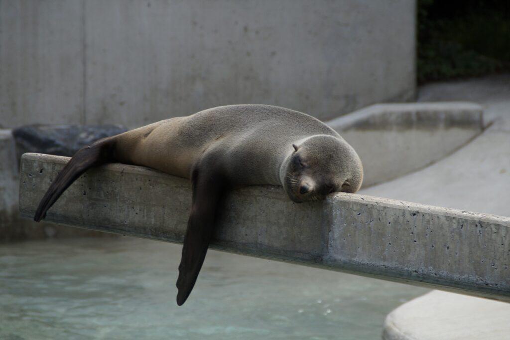 robbe, lazing around, lazy