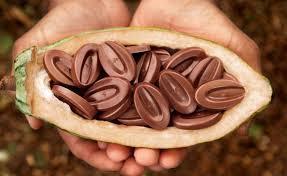 Valrhona Andoa Lactee 39% Milk Chocolate Feves   #12514