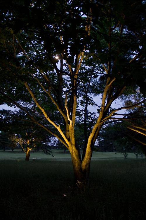 Landscape Lighting   Young's Landscape Management, Inc.