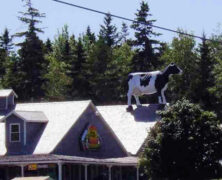Big Cow on the Roof!