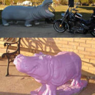 Henrietta the Hippo