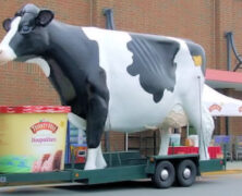 Turkey Hill Dairy Big Cow