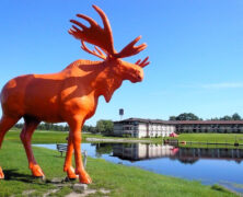 The Majestic Orange Moose