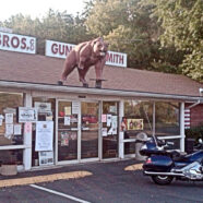 Look! There's A Bear On The Roof!