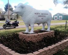 The Big Bull of Berryville