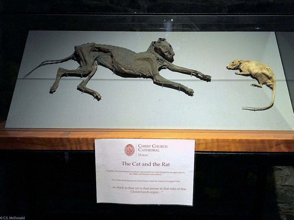 Christ Church Cathedral's Odd Cat and Rat