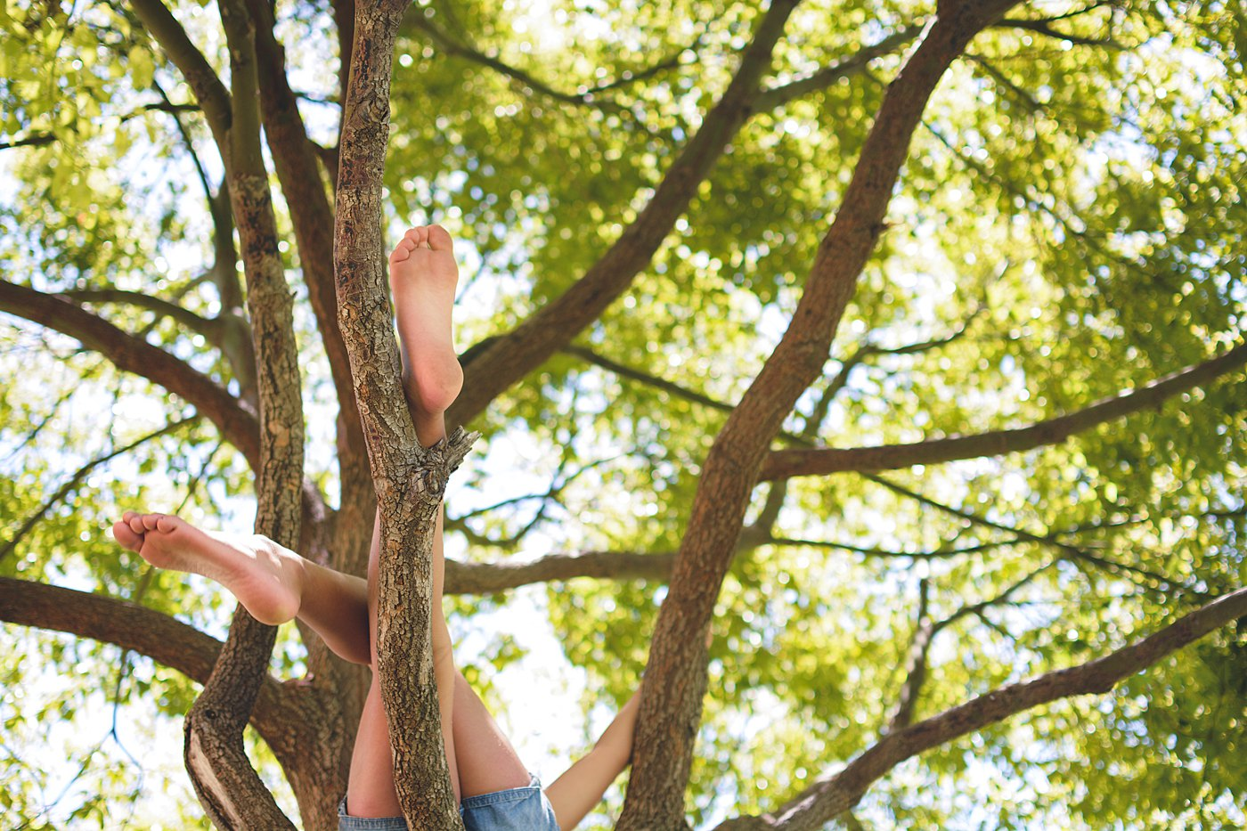 kid in the tree at ford park redlands captured grace by erin family photography