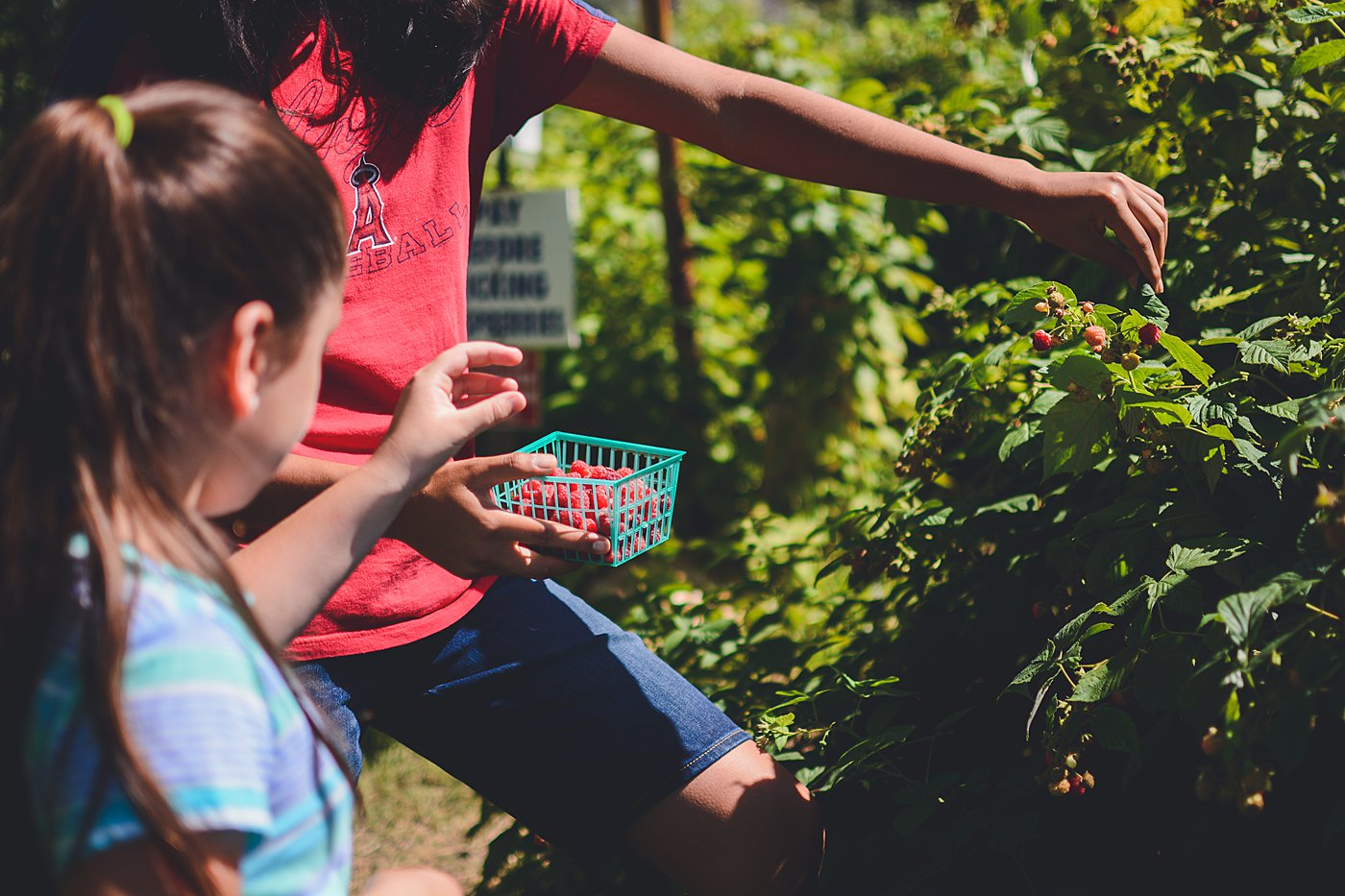 kids berry picking snow line orchard oak glen captured grace by erin family photography