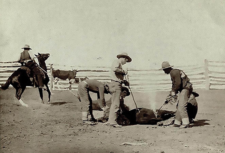 1220-Cattle_branding_(Grabill_1888)-dura-sm