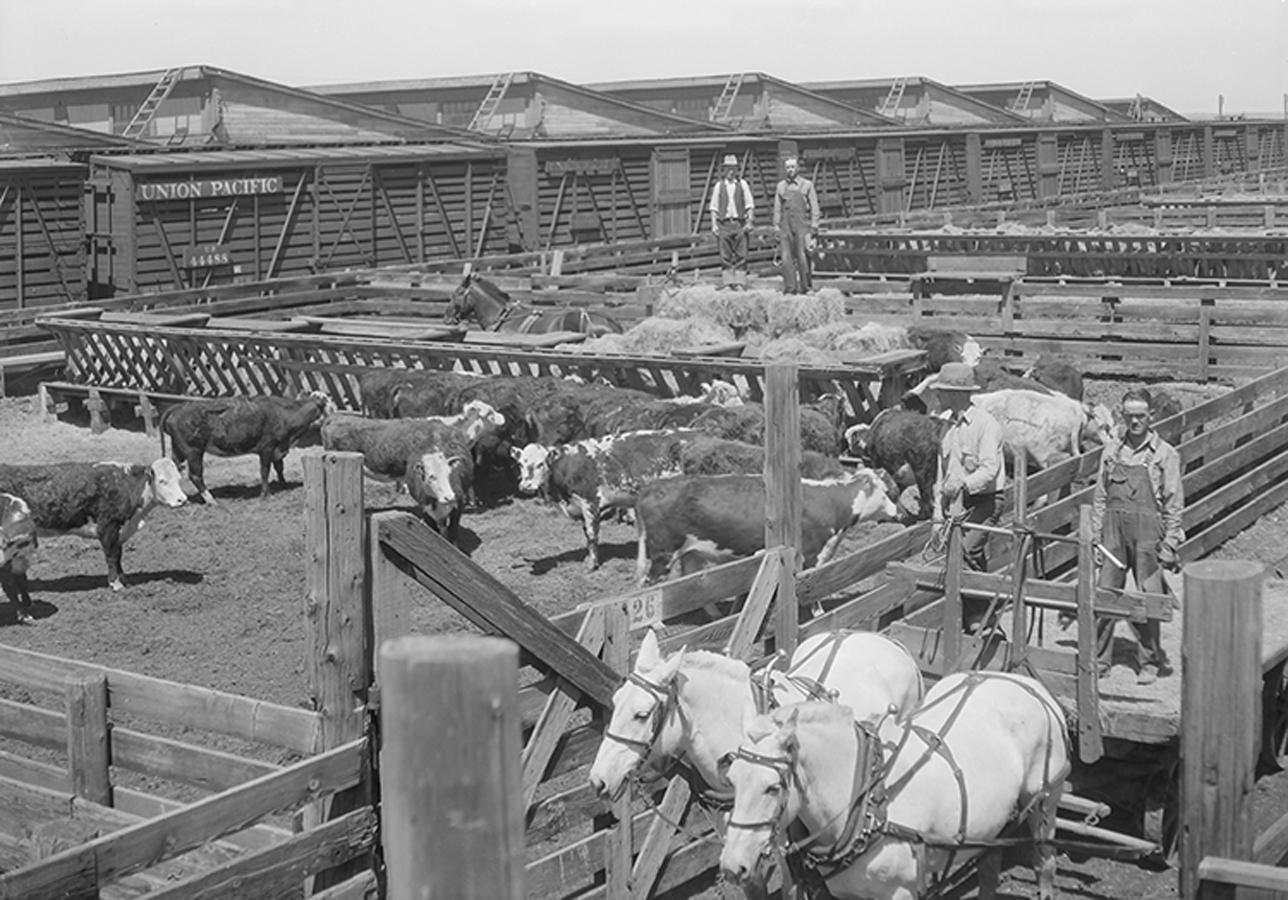 1335-Stockyards-2-dura-sm