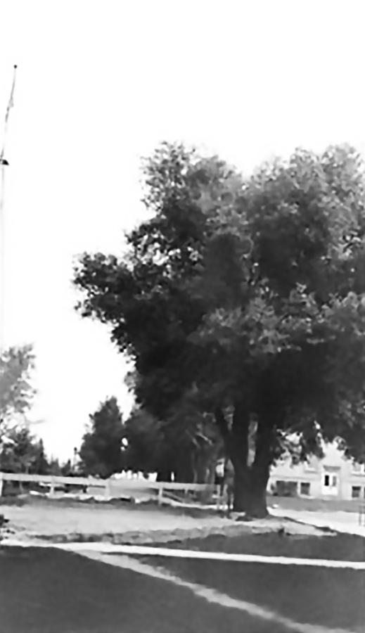 1484-tree-dedicated-to-grace-hebard-dura