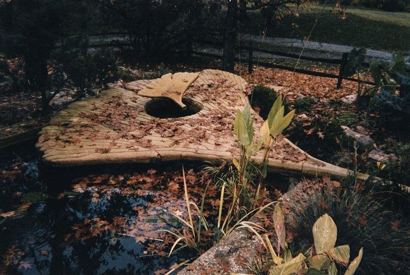 Ginkgo Leaf Pool in Fall.