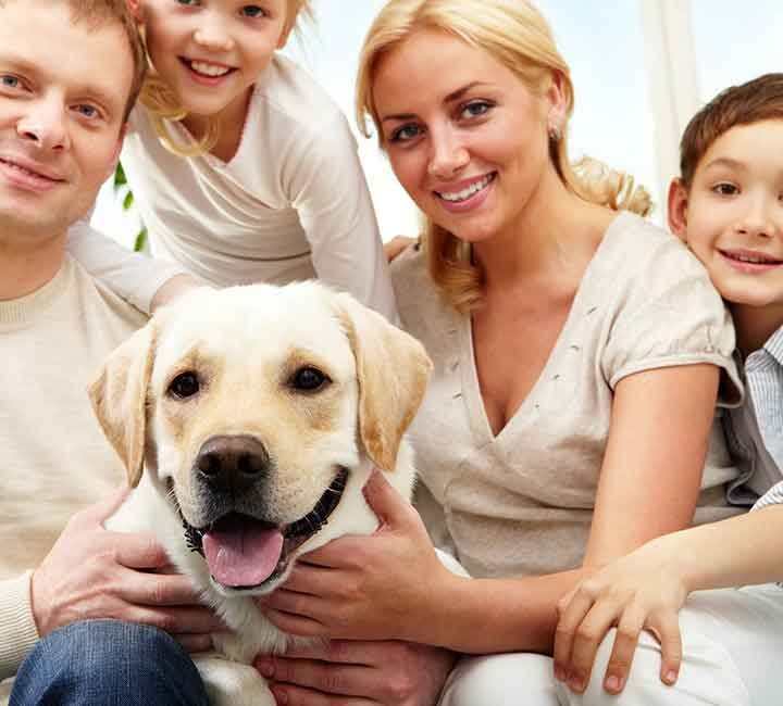 The Family Dog Just Might Cure Your Cabin Fever