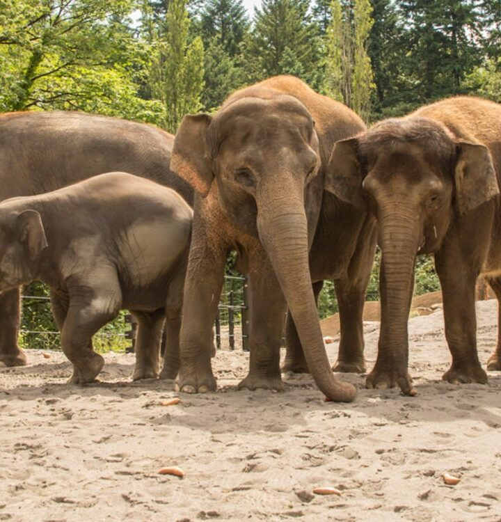 Coronacation Goes To The Zoo – Oregon Zoo Officially Reopening This Weekend
