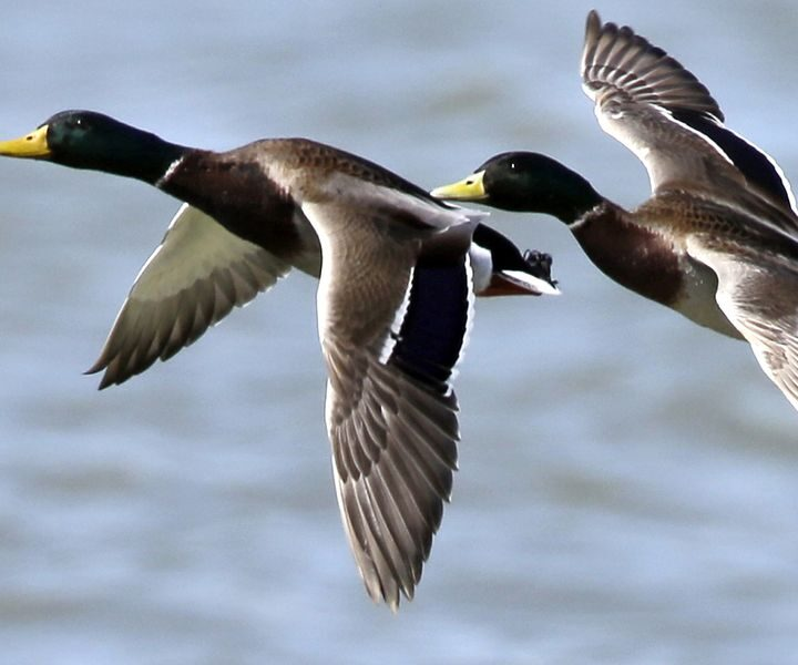 Why Your Kids Will Enjoy The Wonders Of Waterfowl