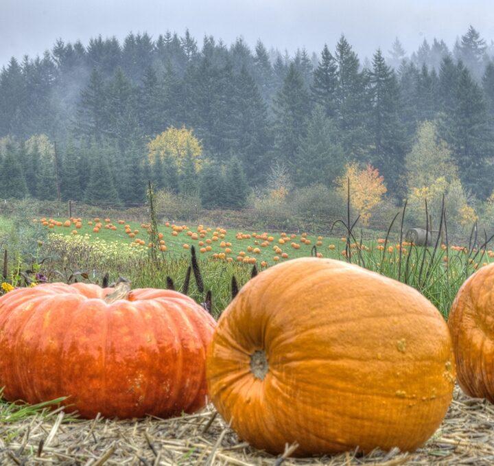 The 5 Best Pumpkin Patches Around Portland