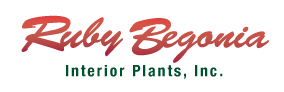 Ruby Begonia