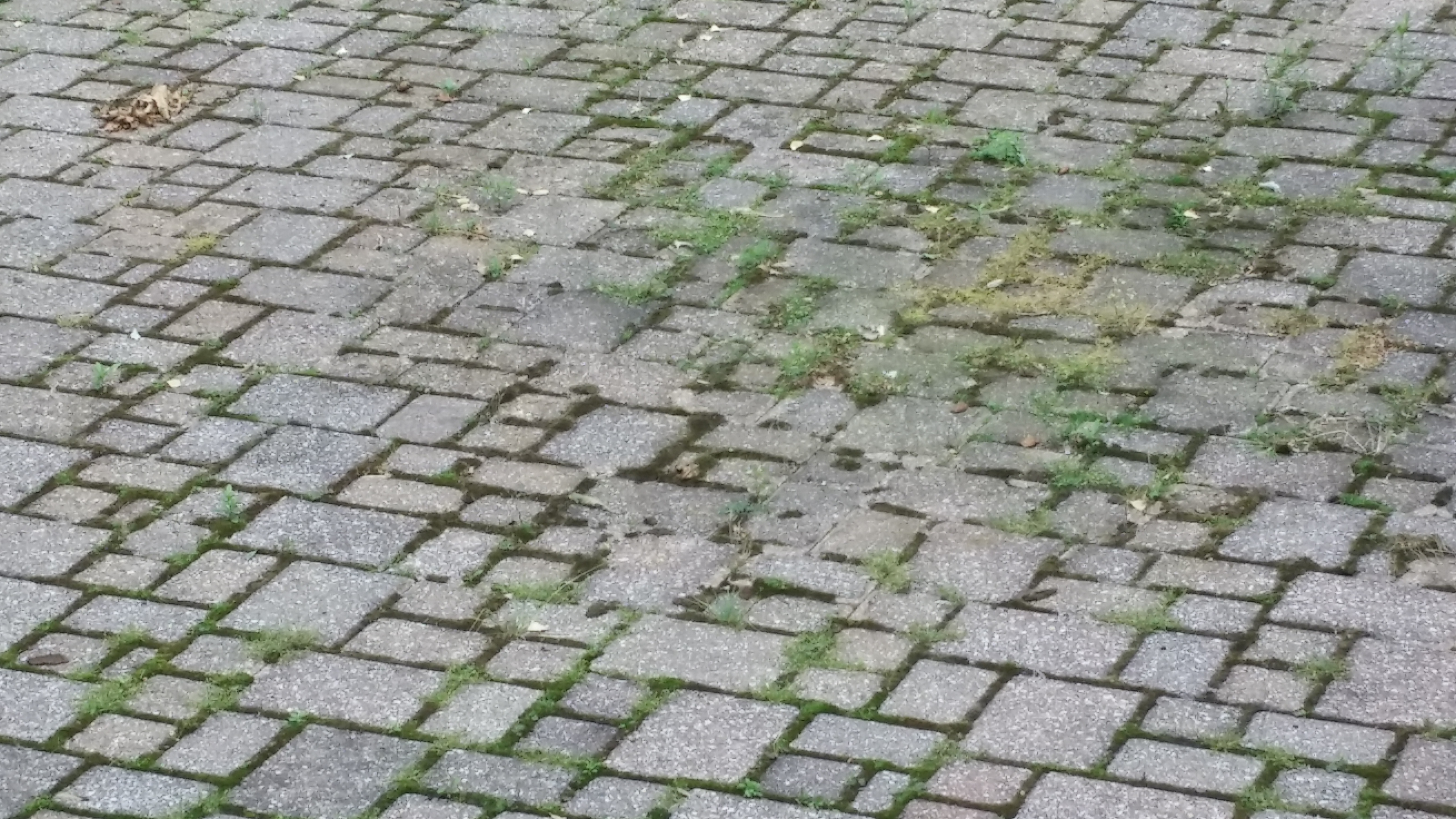 Before - Pressure Washing of a Brick Paver Patio in North Olmsted, Ohio