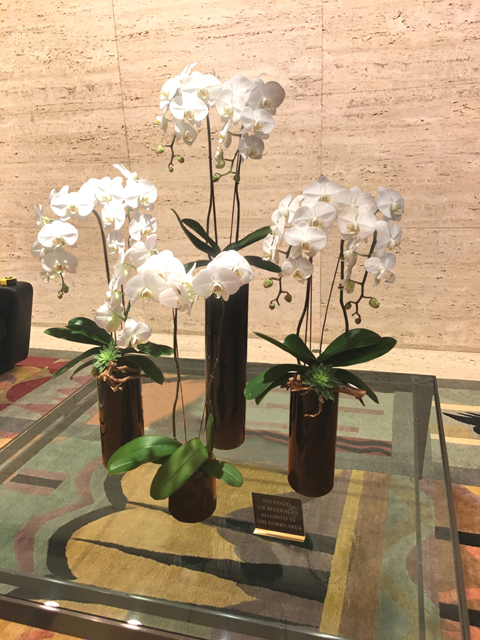 Website Blooming Orchid Arrangement Four Stalks In Oval Bowl Copy
